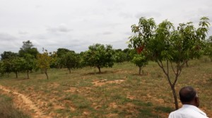 BUY AGRICULTURAL LAND IN CHINNAGOTTIGALLU VILLAGE NEAR TO TIRUPATI