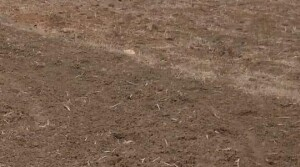 Agriculture land for sale in ongole