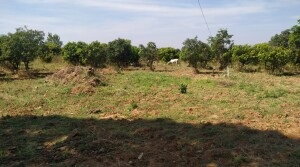 23acers Agriculture land for sale at Narsapur