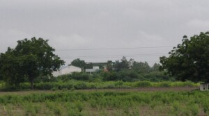 Agriculture land for sale ongole