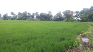Agriculture land for sale in Kerala