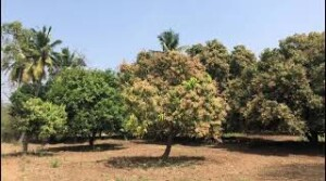 agriculture land for sale at Konakanchi