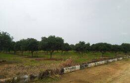 60 Acres land for sale at Shankarpally highway